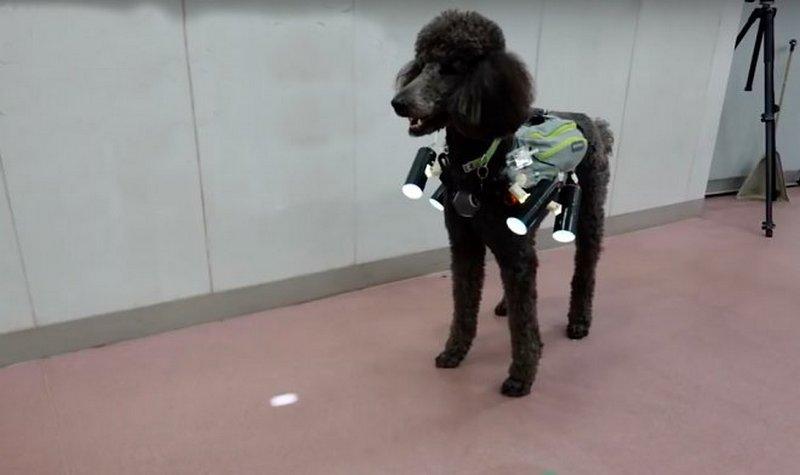 Японцы изобрели систему управления собакой на расстоянии