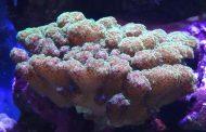Ученые Америки обнаружили в кораллах уникальную иммунную систему
