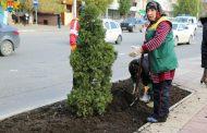 В Махачкале планируется высадить 34 тысячи тюльпанов