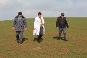 Более 5 тыс. гектаров сельхозземель в Дагестане заражено горчаком ползучим