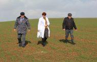 В Дагестане оштрафованы владельцы зараженных сорняком сельхозземель