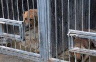 Махачкалинский приют для собак будет расширен