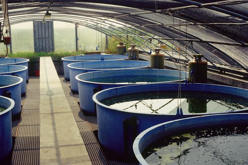 В 2018 году в Дагестане произведено 4175 тонн продукции аквакультуры