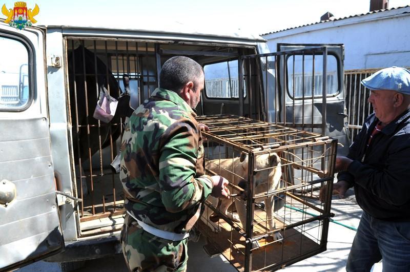 На отлов и содержание бродячих собак в Махачкале добавили пять миллионов
