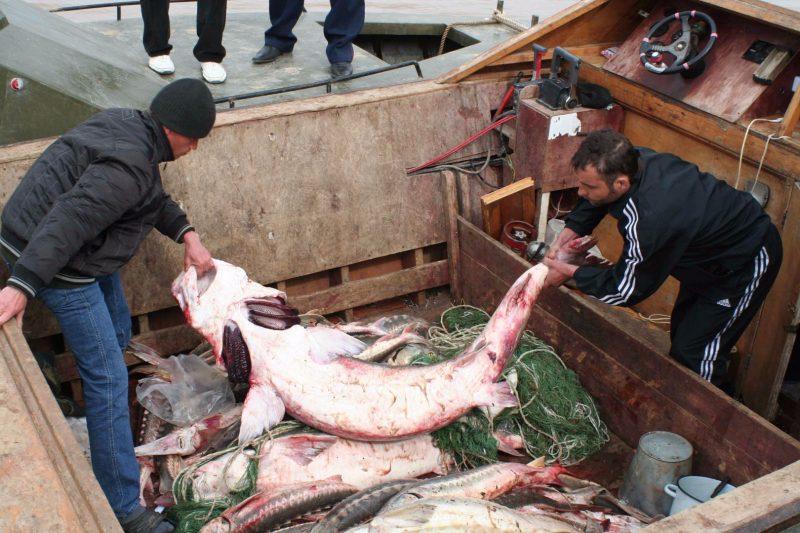 Владимир Васильев предложил нанести серьезный удар по браконьерству на Каспии