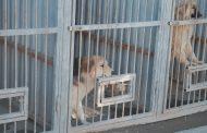 Ловцы псов. Как работает питомник для бездомных животных