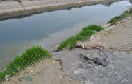 Власти Махачкалы два года не устраняли сток канализации в КОР