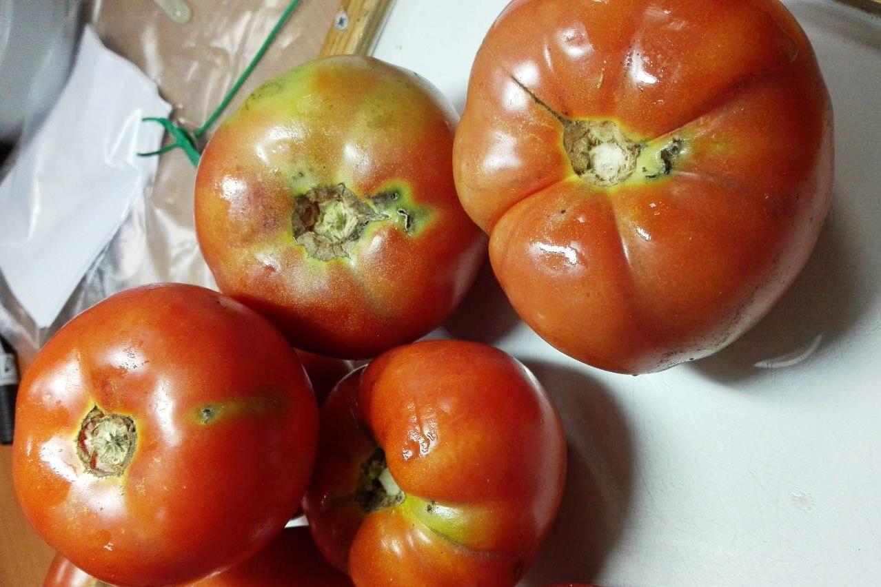 В Дагестане задержали 15 тонн зараженных томатов из Азербайджана