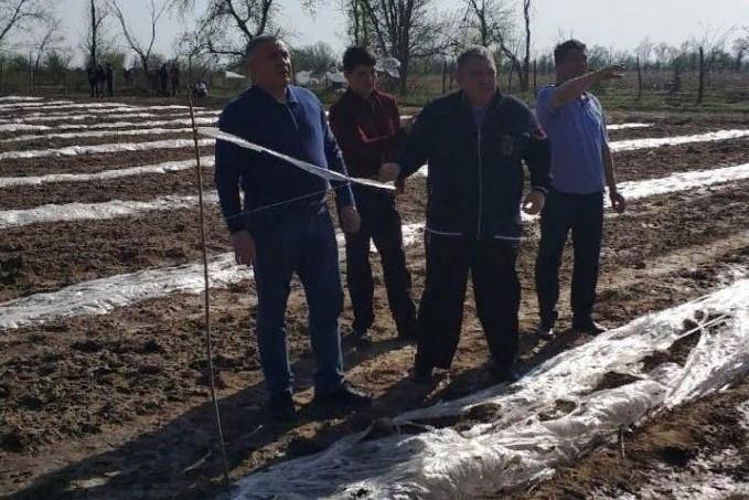 В Ногайском районе град повредил 1500 гектаров посевов