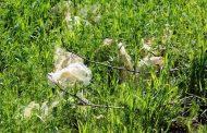 Россельхознадзор рассказал, как бахчевики в Дагестане отравляют земли полиэтиленом
