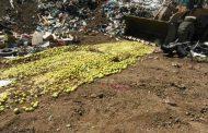 В Махачкале уничтожено более двух тонн санкционных яблок