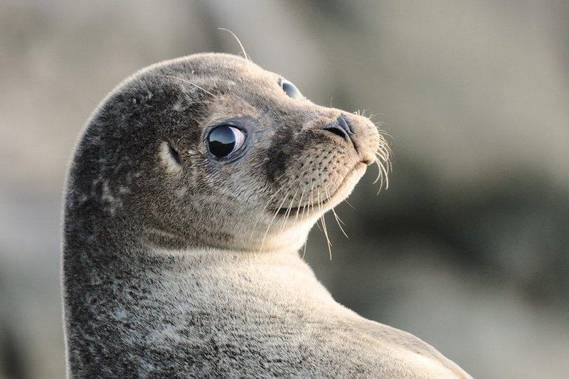 В ДГУ дан старт научным работам по сохранению каспийского тюленя