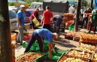 Минсельхоз Дагестана следит за переработкой плодов и овощей на предприятиях республики