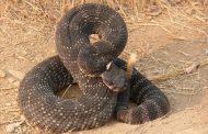 «Вы неинтересны змее, вы не ее добыча». Как вести себя при встрече с пресмыкающимся