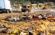 Еще около двух тонн санкционных яблок уничтожено в Дагестане