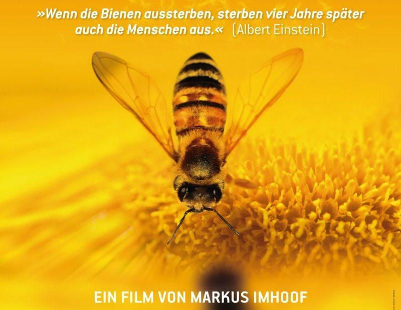 Вымрут пчелы – и нам трындец. Киноподборка об экологии