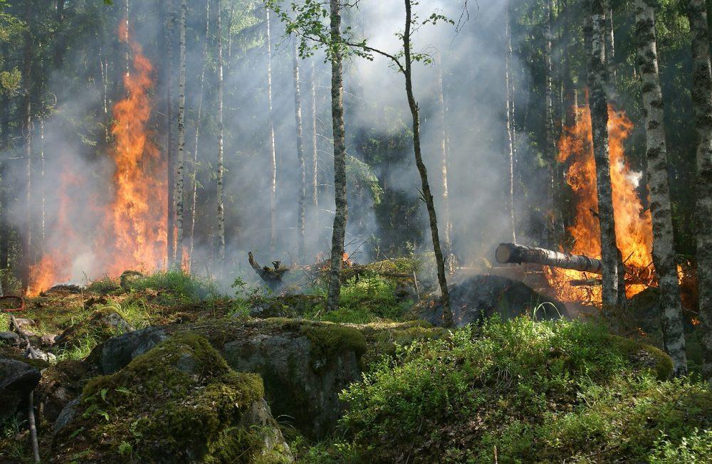 Рукописи не горят, а лес - гектарами