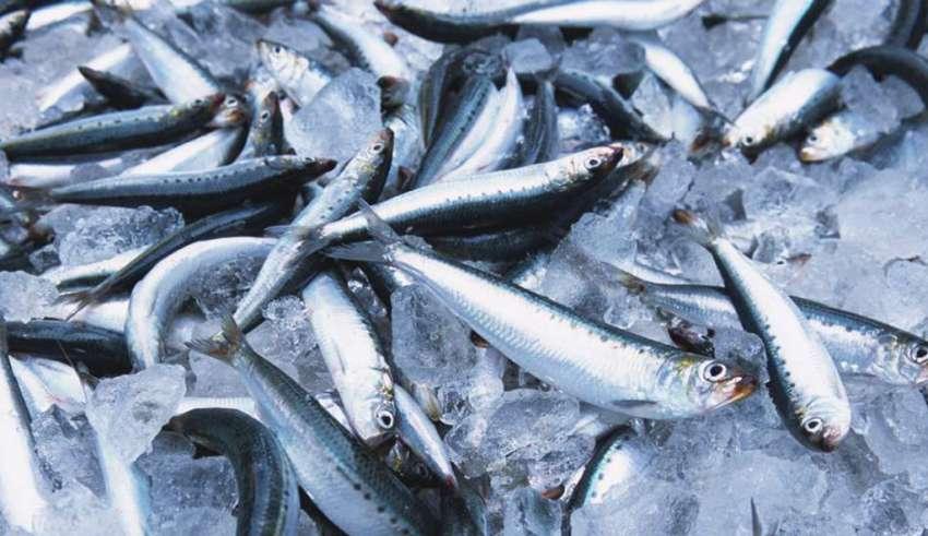В Дагестане планируется построить завод по переработке рыбы