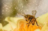 Пчеловеческий фактор. Почему все пчелы попадают в рой