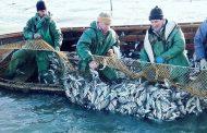 В 2019 году улов рыбы в Дагестане вырос на 30%