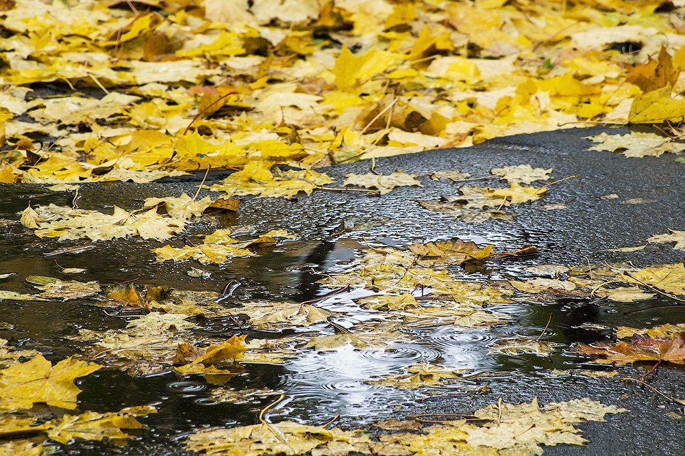 В Махачкале ожидается резкое похолодание, но ноябрь будет теплее обычного
