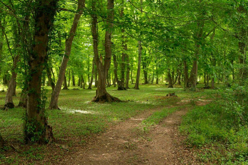 В Дагестане создан национальный парк «Самурский»