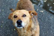 По факту жестокого обращения с животными в Хасавюрте возбуждено уголовное дело