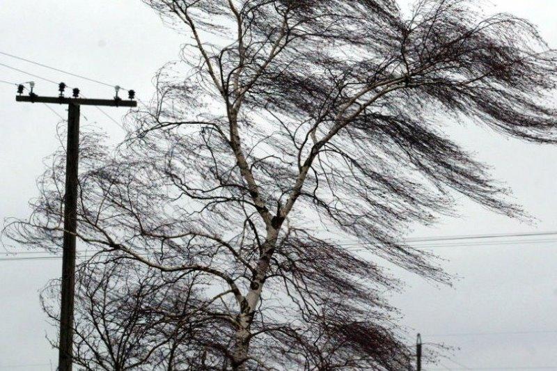 МЧС предупредило об усилении ветра в приморских районах Дагестана