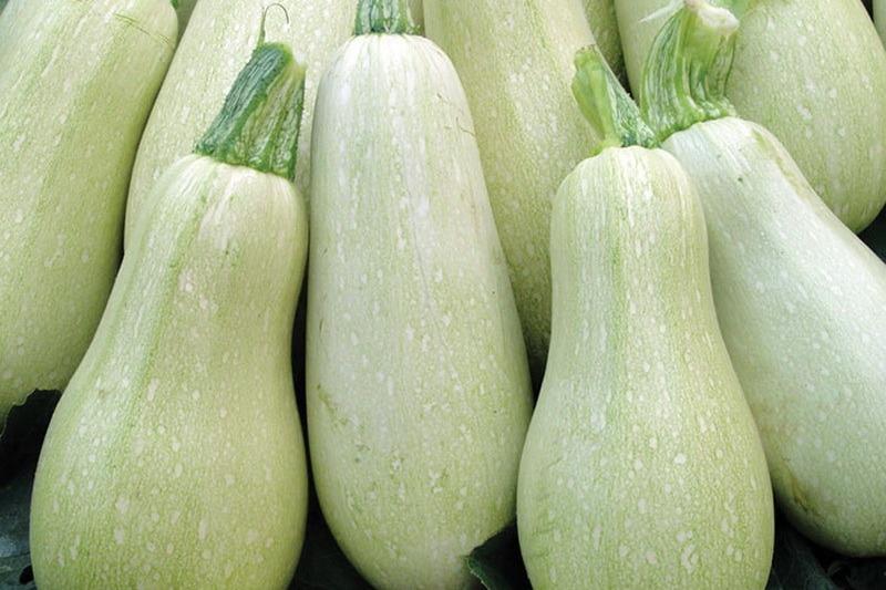 В Хасавюртовском районе впервые начнут выращивать кабачки и цветную капусту