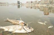 Эксперты: рыба в Ак-Гёль отравлена «химией», источник загрязнения не найден