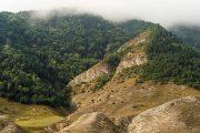 Даглесхоз ограничил доступ в леса в 8 лесничествах республики