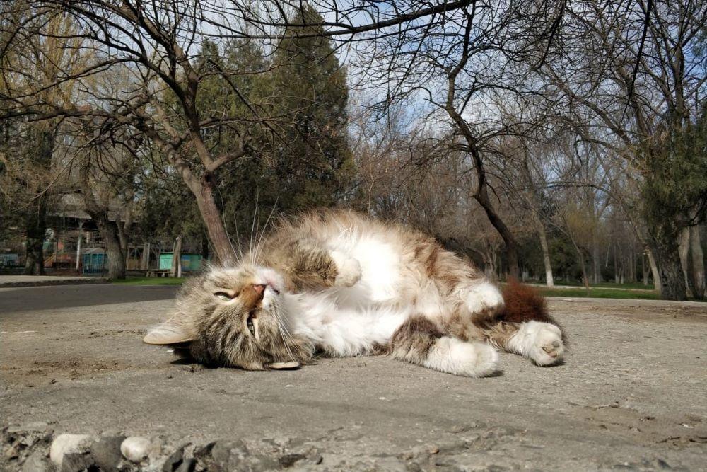 С пятницы по всему Дагестану установится устойчивая теплая погода