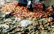В Дагестане сотрудники Россельхознадзора уничтожили более 800 кг яблок из Европы