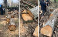 Минприроды: деревья в «собачьем» парке вырубили лесорубы из муниципальной службы