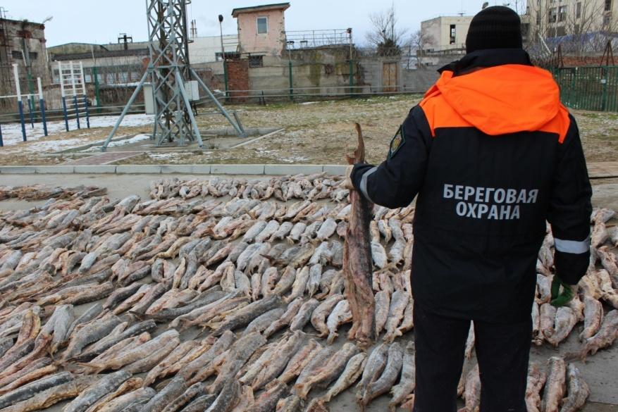 В Дагестане задержали крупную партию осетра на 34 млн рублей