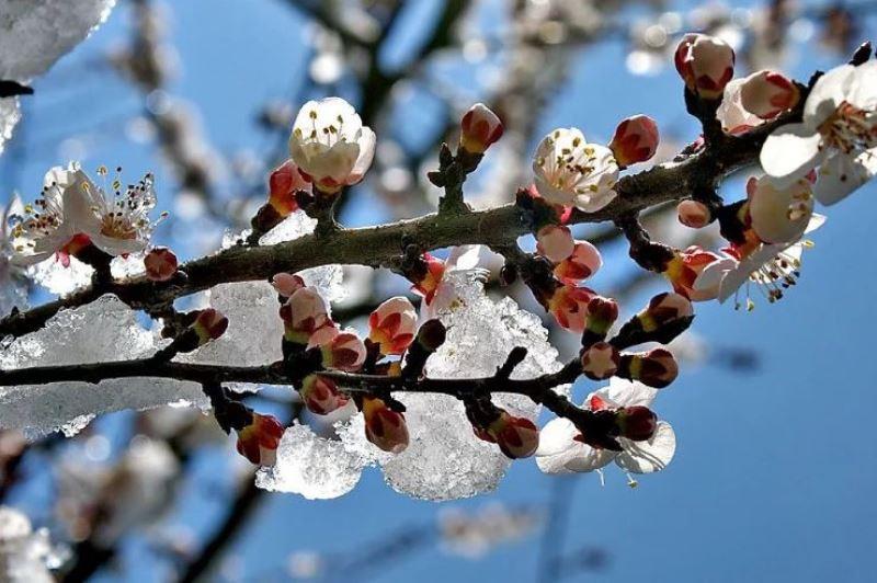 МЧС предупредило о сохраняющихся заморозках в Дагестане
