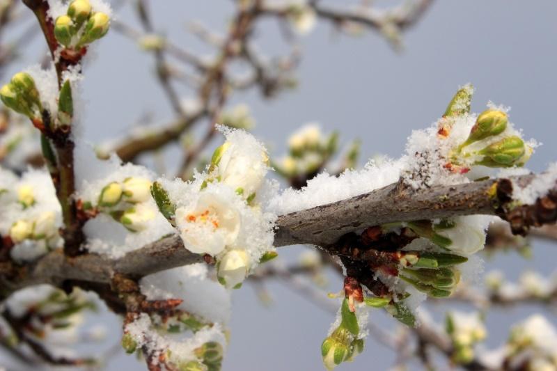 МЧС предупредило о заморозках в Дагестане