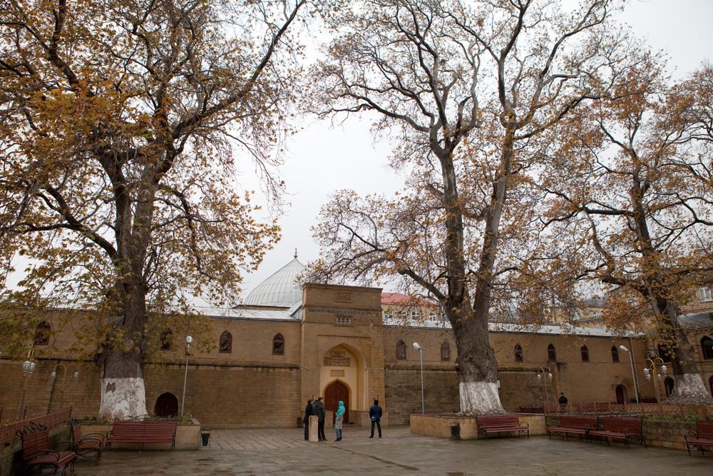 Платан из Дербента заявлен на конкурс «Российское дерево года 2020»