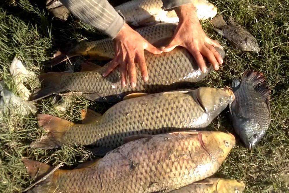 Специалисты выяснят причины выброса сазана на мелководье в Бабаюртовском районе