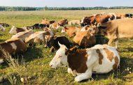 Минсельхоз Дагестана продлил срок приема заявок на гранты для начинающих и семейных фермеров