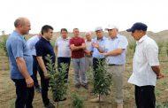 В Табасаранском районе Дагестана развивают предгорное интенсивное садоводство и виноградарство