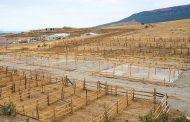 Муфтият подготовит площадки для забоя животных в дни праздника Курбан-байрам