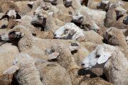 Минсельхоз: сумма экспорта дагестанской продукции приблизилась к 16 млн долларов