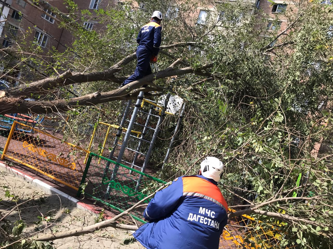 Сильный ветер в Махачкале снес кровли домов и повалил деревья