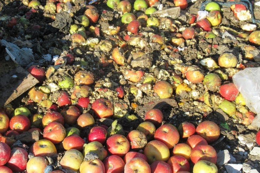 В Дагестане уничтожили более трех тонн санкционных яблок из Польши
