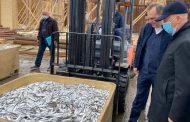 Дагестан активно развивает рыбную промышленность