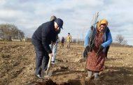 В Дагестане заложено 3,7 тысячи гектаров интенсивных садов