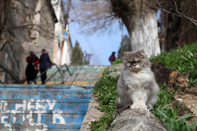 Дагестанские синоптики прогнозируют в горах летние температуры в феврале