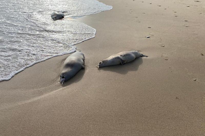 РАН: причиной гибели тюленей в Каспийском море мог стать выброс природного газа