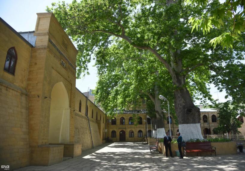 Платан из Дербента претендует на звание «Европейское дерево года – 2021»